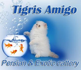 Tigris Amigo cattery